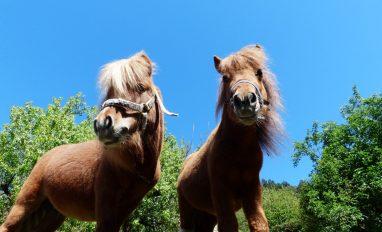 Les baby poney continuent à l'ACEG !